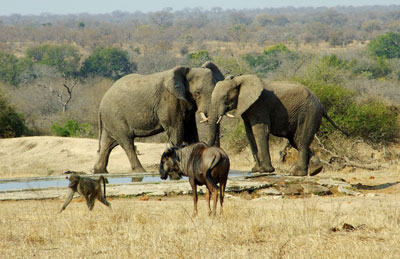 Cape Town Tours with Green Elephant